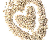 Oats and barley