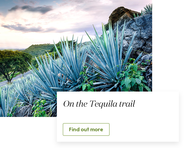 On the tequila trail