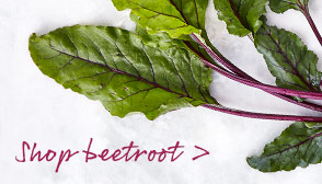 Shop beetroot