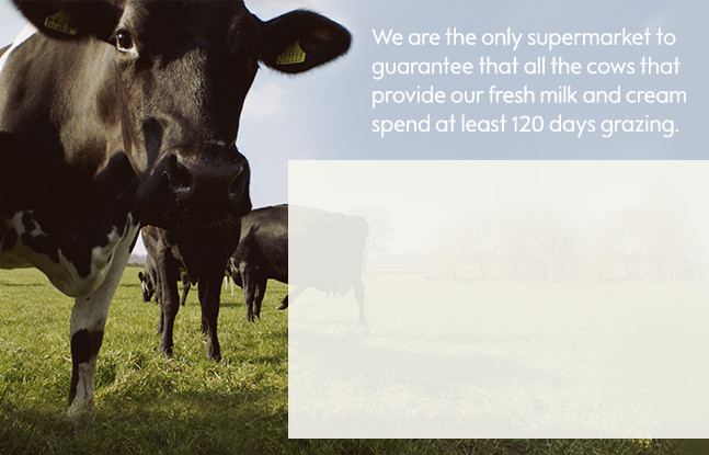 Waitrose & Partners is the only UK supermarket to guarantee that all our cows producing milk spend a minimum of 120 days a year grazing in fields