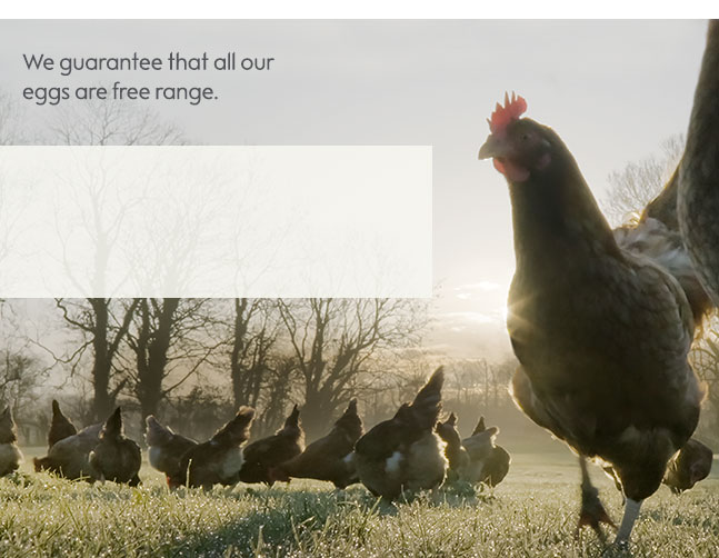 All Waitrose & Partners eggs are free range