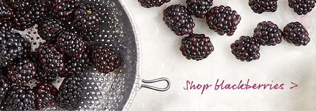 Shop blackberries