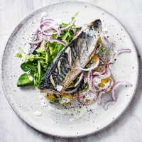 Mackerel salad with yuzu dressing