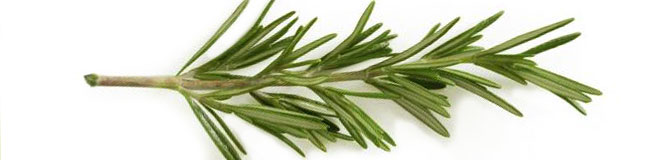 Woody, aromatic rosemary